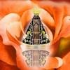 70ª Festa em Homenagem a Nossa Senhora Aparecida